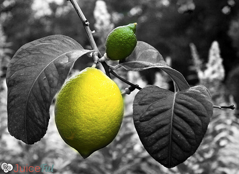 lemonas